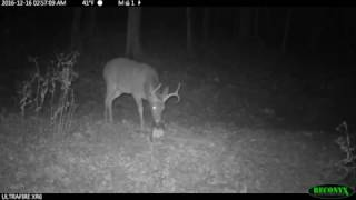DEER CHUM and DEER TREATS 12-16-16