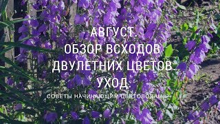 Август.Обзор всходов двулетних цветов. Уход за растениями