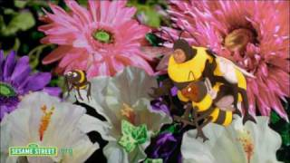 sesame street baby bear and bees