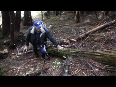 Exploring the Remains of the Wellington Avalanche of 1910