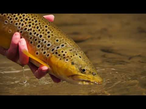 ORVIS - Dry Fly Tactics - Using Small Dries