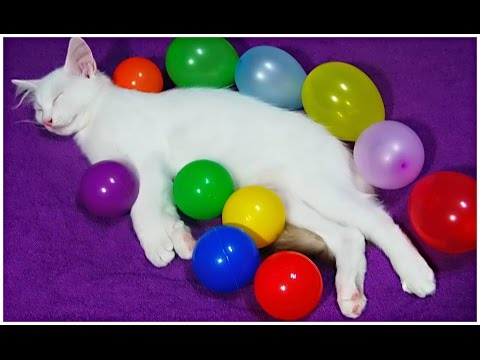 NEW Finger Family Song for LEARNING COLORS with REAL Cat - Baby Songs play balls and balloons