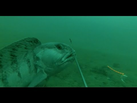 Fishing with GoPro in Norway 2016