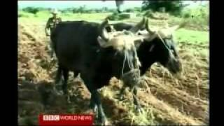 Life Inside Cuba 1 of 7 . BBC World News Documentary