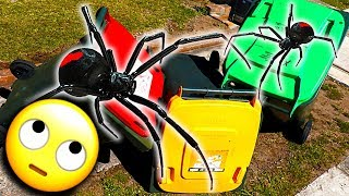 Trash Bins Spider Removal $20 Fix & Redback Spider Tank EDUCATIONAL VIDEO