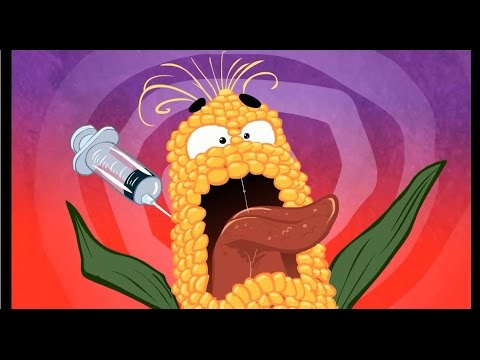 GMO A Go Go Truth about GMOs explained in new animated cartoon