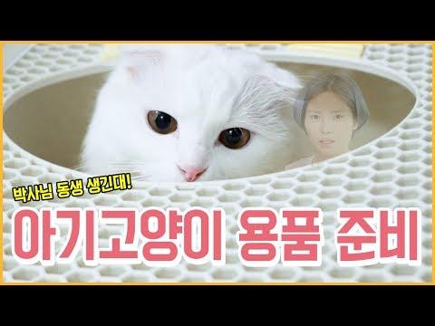 꽁지네 둘째 냥이?! 아기 고양이 입양 준비로 물건 샀다! 고양이 용품 하울/Cat Supplies Haul/Shopping/KKONGJI