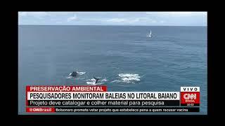 CNN Brasil - Expedição Entre Baleias e Golfinhos