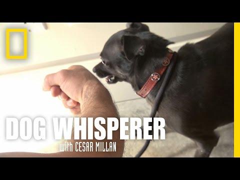 Confronting Richard | Dog Whisperer
