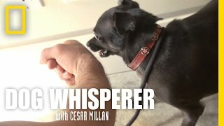 Confronting Richard | Dog Whisperer