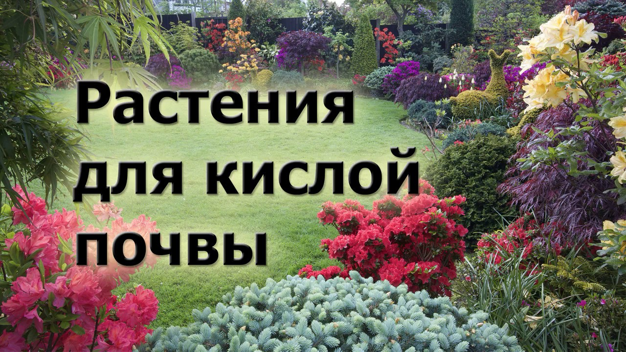 растения на кислой почве