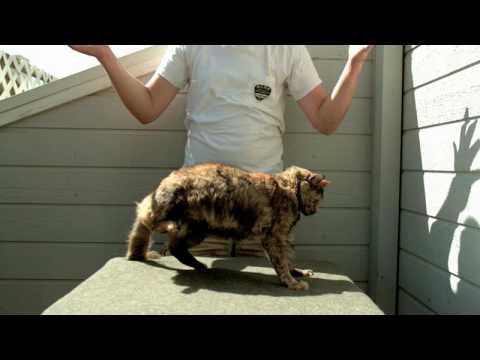 Cat Flip Doovi
