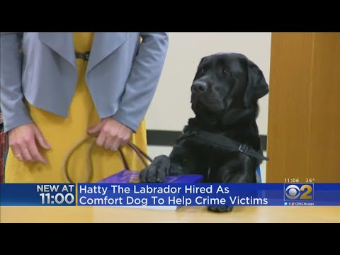 Mick Lee - Black Lab Sworn in at Illinois State's Attorney's Office in Chicago