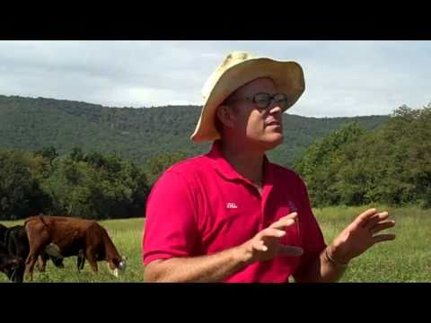 Polyface Farm - Salad Bar Beef - Part 1