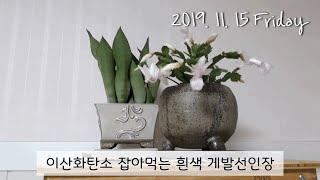 11월의 베란다 흰색 게발 선인장 꽃