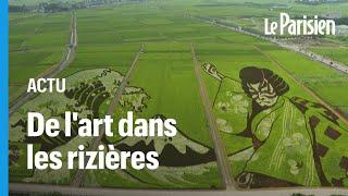 Une ville japonaise transforme ses rizières en oeuvre d'art