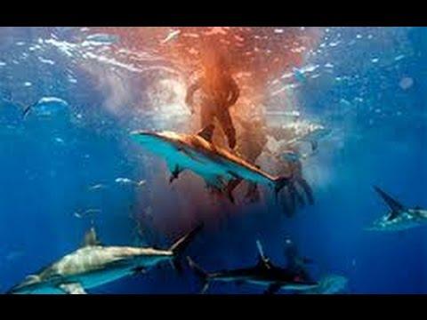 Pacific Ocean Sharks & Animals: Best Shark Nature Wildlife BBC Documentary HD