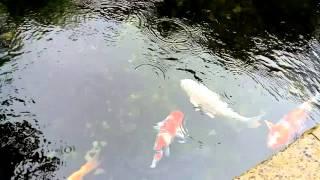 Sea creatures at Ocean Park Hong Kong