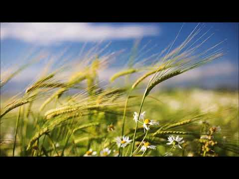 Wind Sound Effect | Free Sound Clips | Ambient Sounds
