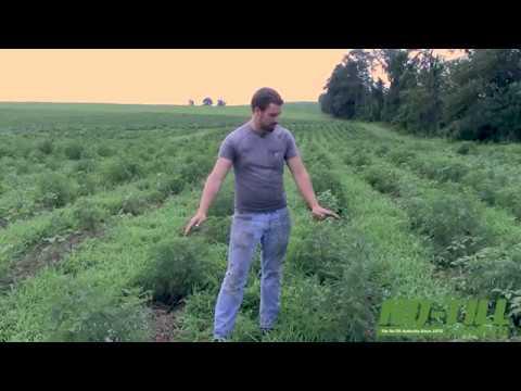 One Farm's Experience No-Tilling CBD Hemp