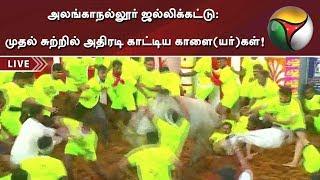 அலங்காநல்லூர் ஜல்லிக்கட்டு: முதல் சுற்றில் அதிரடி காட்டிய காளை(யர்)கள்! | Alanganallur Jallikattu