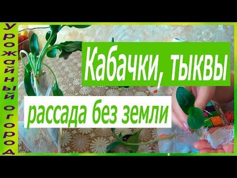 Сорта салата для выращивания