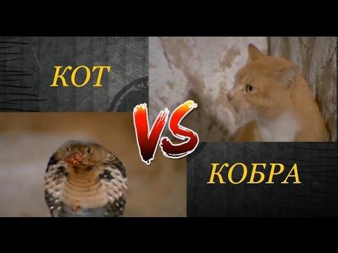 Mortal combat vs Cobra. Смертельная битва. Кот против кобры.