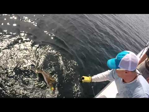 Awesome Fishing Offshore Maine 6-14-2015 Halibut, Lobster, Wolffish, Cod, Haddock, Pollock