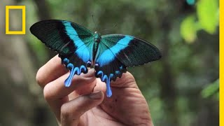 Inside the Lives of Butterfly Traders | National Geographic