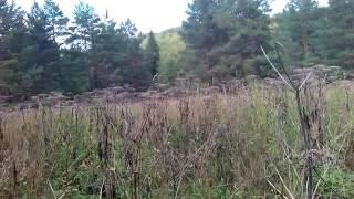 видео Хвойные породы древесины: сорта и гост разновидности уход