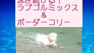 大好評!名犬になるための14ステップ教室 ▽今だけ【無料】犬のしつけ...