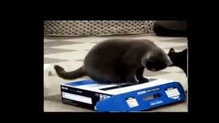Video [Full] Funny cat videos behavior compilation 2015.Mp4 download MP3, 3GP, MP4, WEBM, AVI, FLV Agustus 2018