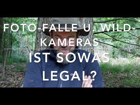 Fotofallen im Wald und der Datenschutz (Waldfragestunde)