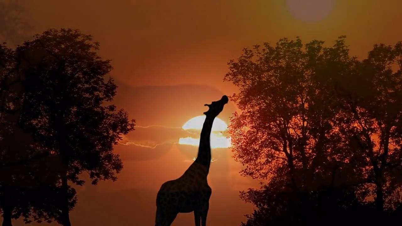 Звуки природы африки скачать бесплатно