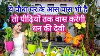 ये पौधा घर के आस पास भी है तो पीढ़ियों तक वास करेगी धन की देवी माता लक्ष्मी आपके घर में Vastu Rules