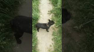 Czy pies widzi ducha?