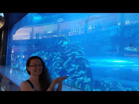 The Dubai Mall Aquarium (11 December 2019)