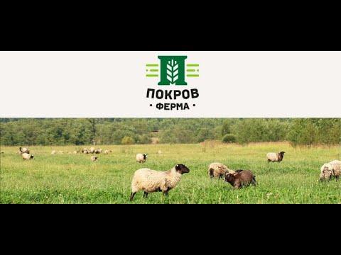 видео: Сыры от Фермы Покров