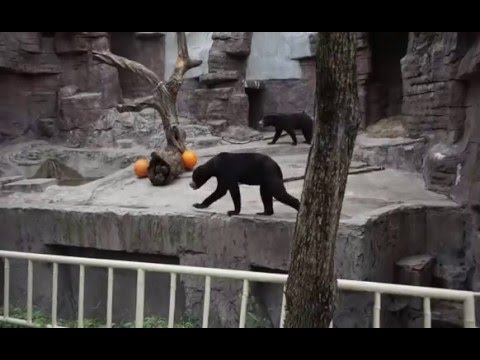 Osaka Tennoji Zoo Bears 天王寺動物園