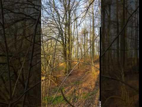 Nature in Germany / Natur in Deutschland