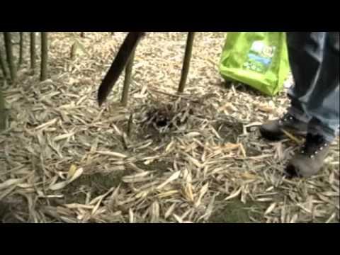 Farm Bamboo for Profit