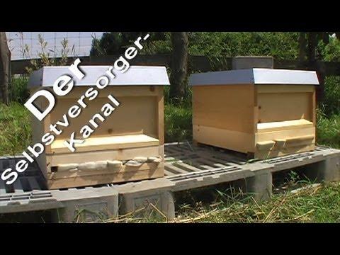 Bienenjungvolk pflegen