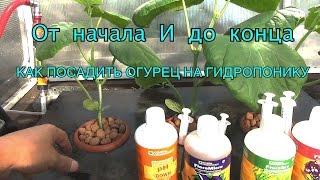 Как посадить огурец на гидропонике в теплице! Принцип работы гидропоники.(, 2016-07-21T15:36:24.000Z)