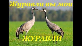 """""""ЖУРАВЛИ""""  - Завершский  СДК.!!!"""