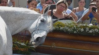 horse lays his head on coffin as he mourns the loss of his human best friend