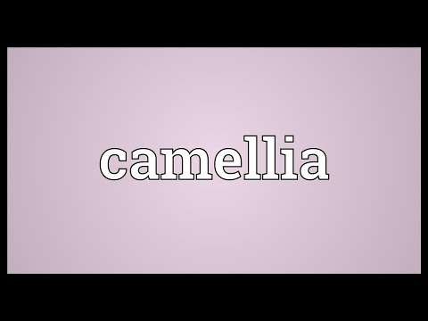 Camellia Meaning