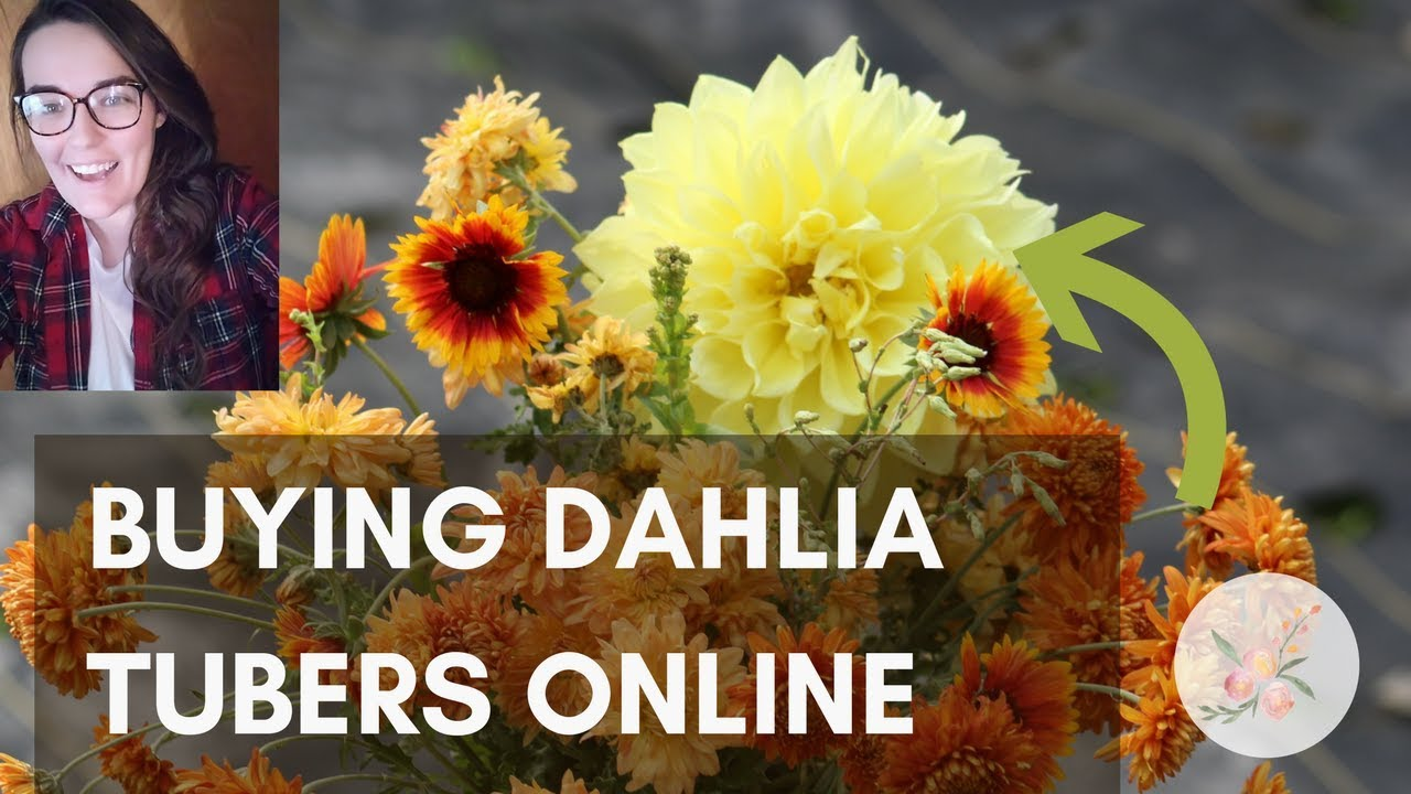 Where To Buy Dahlia Tubers Flower Container Gardening How Cut