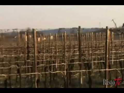 Azienda agricola Giovanna Tantini