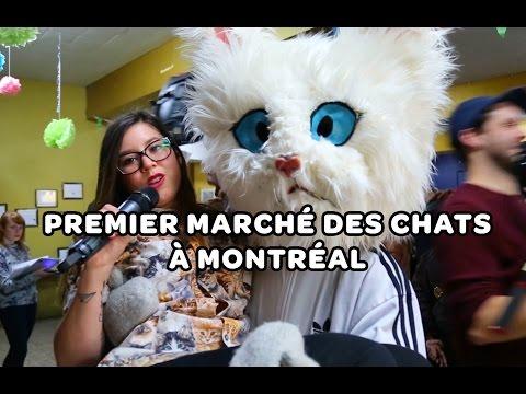 Visite du premier marché des chats à Montréal