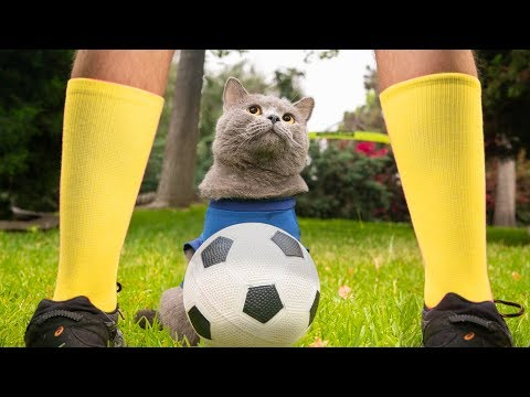 download World Cup Cats